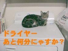 Tama_dryer2