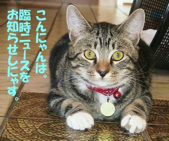 Tama_news1
